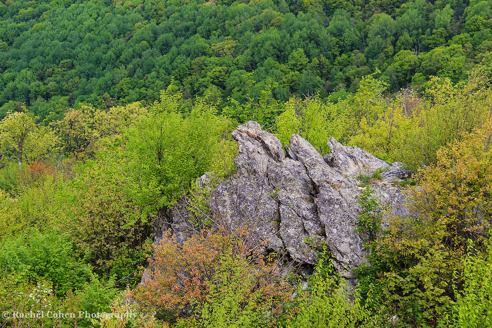"""""""Rocky Mountain spring""""<br /> <br /> Beautiful large jagged boulders stand tall among spring's new vegetation, with a backdrop of green trees on a mountainside!!<br /> <br /> The Blue Ridge Mountains by Rachel Cohen"""