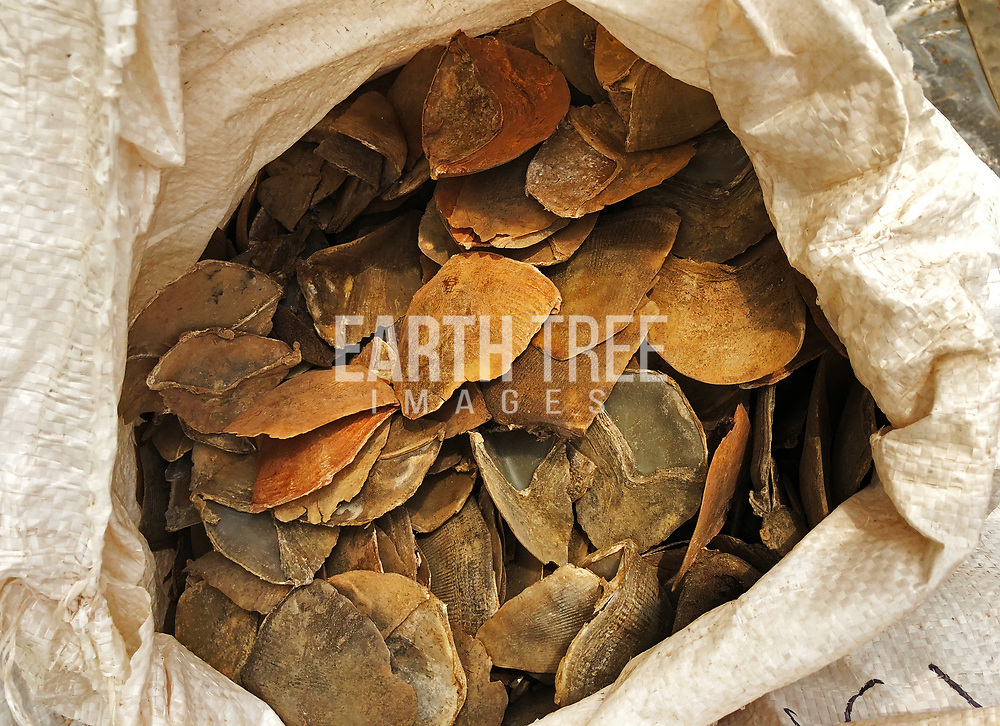 """National Parks Board, Singapore Customs and Immigration & Checkpoints Authority seized 12.7 tonnes of pangolin scales; record combined haul of 25.6 tonnes seized within five days<br /> 10 April 2019 – On 8 April 2019, the National Parks Board (NParks), Singapore Customs and Immigration & Checkpoints Authority (ICA) inspected a 40-footer container that was on its way from Nigeria to Vietnam. The container was declared to have contained """"Cassia Seeds"""". Upon inspection, 12.7 tonnes of pangolin scales, packed in 474 bags, worth about US$38.1 million (approximately S$51.6 million) were uncovered. The pangolin scales that were seized came from two species and are equivalent to around 21,000 pangolins.<br /> This is the second seizure of pangolin scales made in just five days, bringing the total combined amount of pangolin scales seized on 3 April 2019 and 8 April 2019 to a record 25.6 tonnes. Previously in 2015 and 2016, Singapore made two pangolin scales seizures, amounting to 440kg.<br /> NParks, Singapore Customs and ICA have in place a risk assessment framework, where risk profiles and risk indicators are used to target shipment with illegal wildlife trade. There is also sharing of information amongst international agencies.<br /> Singapore is a signatory to the Convention on International Trade in Endangered Species of Wild Flora and Fauna (CITES) and is committed to international effort to curb illegal wildlife trade. Elephants and pangolins are protected species under CITES. International trade in elephant ivory and pangolin is prohibited.<br /> Under the Endangered Species (Import & Export) Act, the maximum penalty for illegal import, export and re-export of wildlife is a fine of up to $500,000 and/or 2 years' imprisonment. The same penalties apply to transit or transhipment of illegal wildlife species, including their parts and derivatives. Photo: Handout, Singapore parks / Earth Tree Images wildlife trade, wildlife markets, wildlife crime, wildlife market, pangp"""