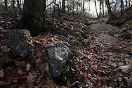 Mountainville, New York - Oak leaves on the ground on the Jessup Trail on Schunnemunk Mountain on Nov. 28, 2010.