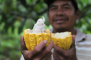 Justino Peck, 49, Mopan Mayan cacao grower from San Jose, Toledo, holds a recently harvested and split cacao pod from his personal lot. Mr. Peck served as TCGA chairman from 1992 to 1997, once again from 2003 to 2010, and is currently the TCGA's liaison officer. Toledo Cacao Growers' Association (TCGA), San Jose, Toledo, Belize. January 25, 2013.