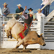 A man riding a bull at the Wilsall Rodeo in Montana.