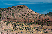 The geology of Isla Partida is traced by vegetation; Jan 2010