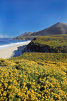 Spring flowers bloom along the Big Sur Coast