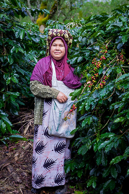 Ibu Isnaini (50) picks coffee cherries at her husband's farm associated with Tunas Indah.  She has been working in the farm for almost all of her life.