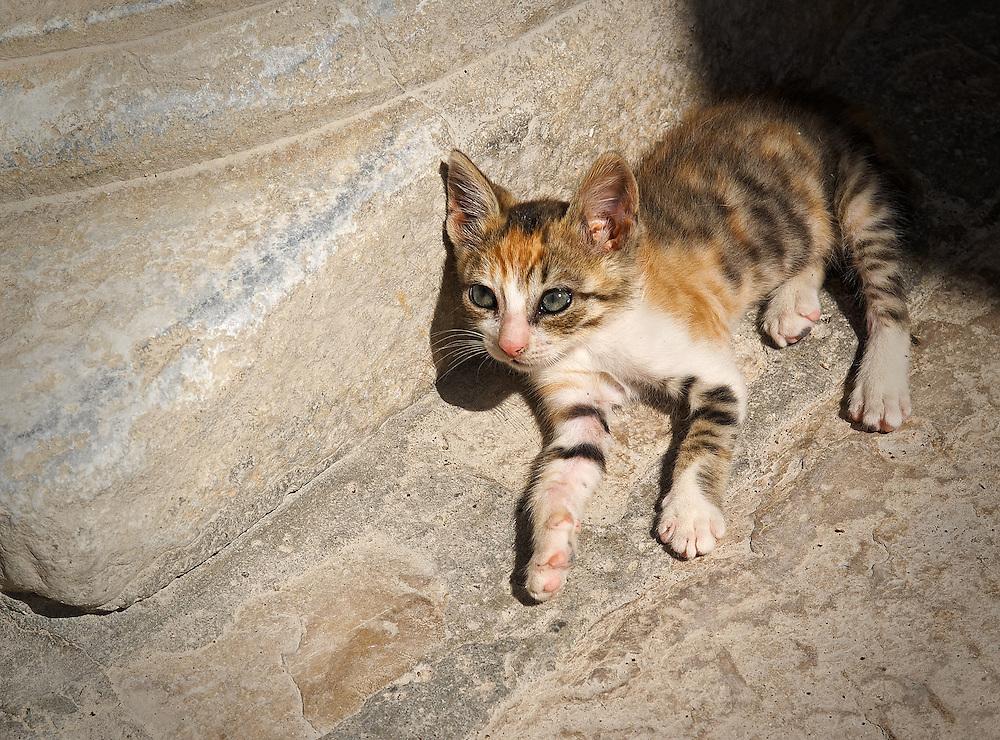 Tunisia - Lone kitty