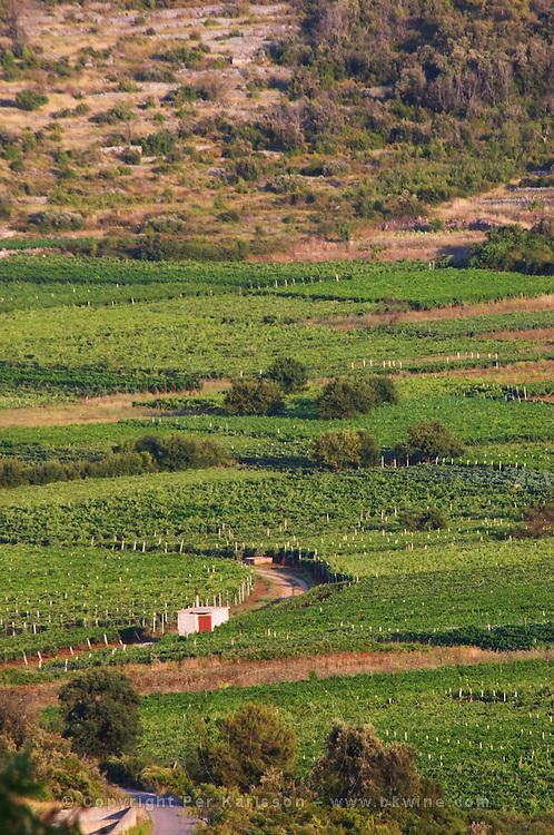 View over Smokvica vineyards on Korcula from the Toreta Winery Toreta Vinarija Winery in Smokvica village on Korcula island. Vinarija Toreta Winery, Smokvica town. Peljesac peninsula. Dalmatian Coast, Croatia, Europe.