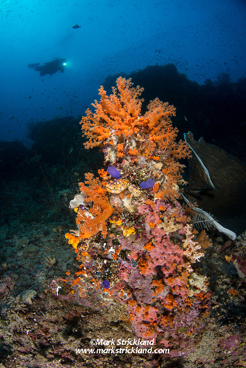 A small pinnacle covered with soft corals and tunicates appears to dwarf a distant diver. Raja Ampat, West Papua, Indonesia, Indian Ocean