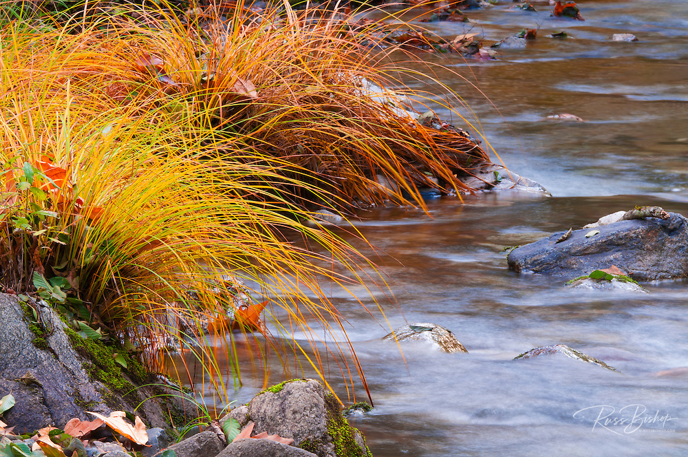 Grass along the Nacimiento River, Los Padres National Forest, California