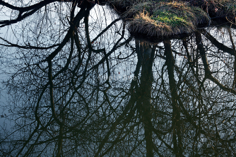 water edge with twigs from trees reflecting in the water