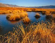 Saline Valley Marsh, Saline Valley,Death Valley National Park, California
