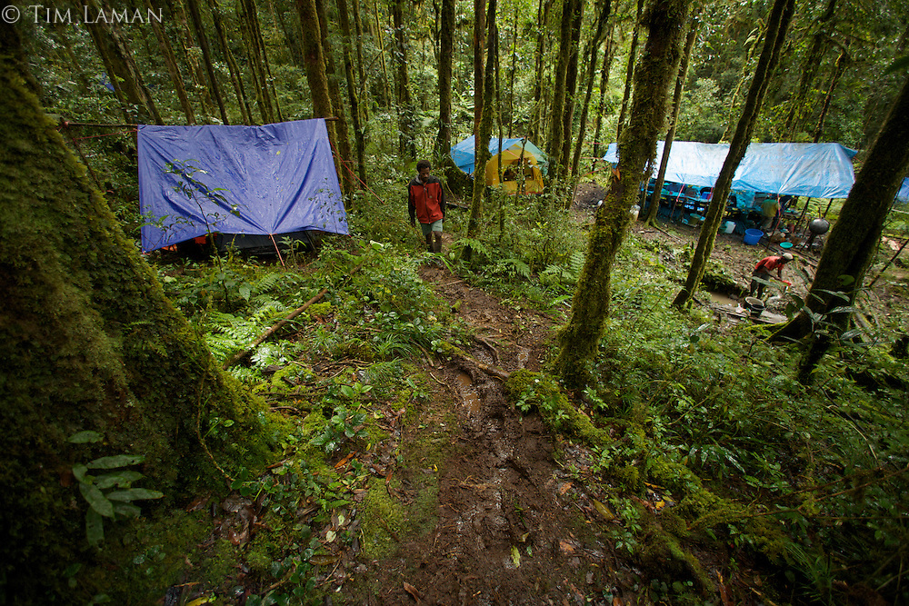 "View of the main camp site known as ""Bog Camp"" in the Foja Mountains - base of operations for the CI RAP expedition to the Foja Mts in 2008.<br />