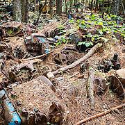 A section of the Old Car City junkyard in Georgia where a hundred or so engine blocks are slowly rusting under a layer of pine needles and underbrush.