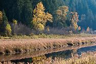 Fall foliage along the edge of Katzie Marsh in the Pitt-Addington Wildlife Management Area - Pitt Meadows, British Columbia, Canada
