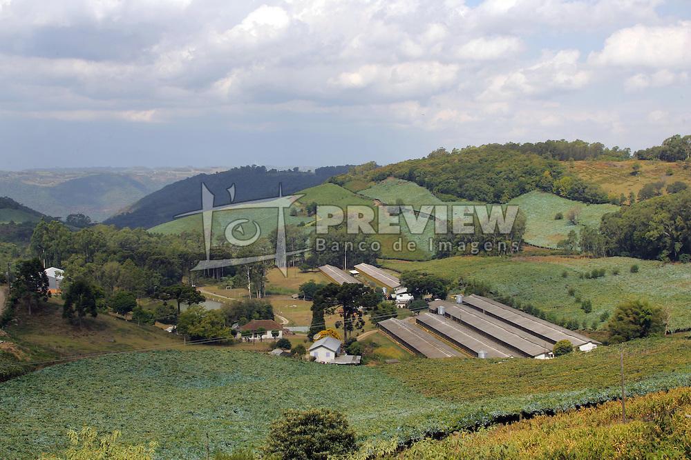 Colheita da Uva, na propiedade de Jurandir Possamai, no municipio de Bento Gonçalves, na serra gaucha. FOTO: Jefferson Bernardes/Preview.com