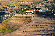 vineyards quinta do porto the house of dona antonia ferreira douro portugal