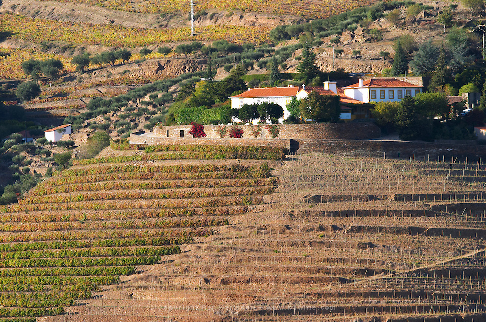 vineyards quinta do porto the house of dona antonia ferreira douro portugal