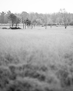 Small trees seem to float on a sea of frosted grass at dawn on Whitmoor Common. Photograph by Andrew Tobin/Tobinators Ltd