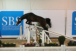 313, Hermes De Fremis<br /> SBS Keuring 2016 Gesves<br /> © Hippo Foto - Counet Julien