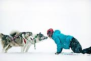 Dogsledding in winter storm, Minnesota