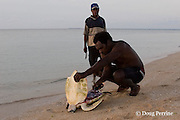 Boigu people butcher a small green sea turtle, Chelonia mydas, Kerr Island, Torres Strait, Queensland, Australia; the Boigu are the traditional owners of Kerr Island and are legally allowed to take turtles for food