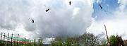 Multi exposure of DSC member David Aitkenhead being fired 150 feet by first trebuchet human catapult. April 2000. Somerset.<br />© Copyright Photograph by Dafydd Jones<br />66 Stockwell Park Rd. London SW9 0DA<br />Tel 0171 733 0108