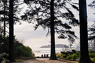 A small group of surfers sit in at the edge of the forest watching the swell and waves at Chesterman Beach in Tofino, British Columbia