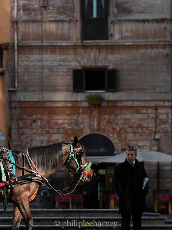 Horse of a tourist carriage, Piazza Della Rotonda, Rome, Italy.