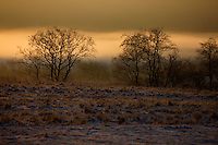 Old orchards at dawn. Bieszczady National Park, Poland