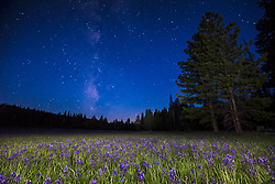 """""""Milky Way Above Sagehen Meadows 3"""" - Photograph of the Milky Way and other stars above a field of Camas wildflowers at Sagehen Meadows, near Truckee, California."""