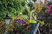 Final preparations for Safary in Bloom gates at the Chelsea Flower Show organised by the Royal Horticultural Society with M&G as its amin sponsor for teh final year.