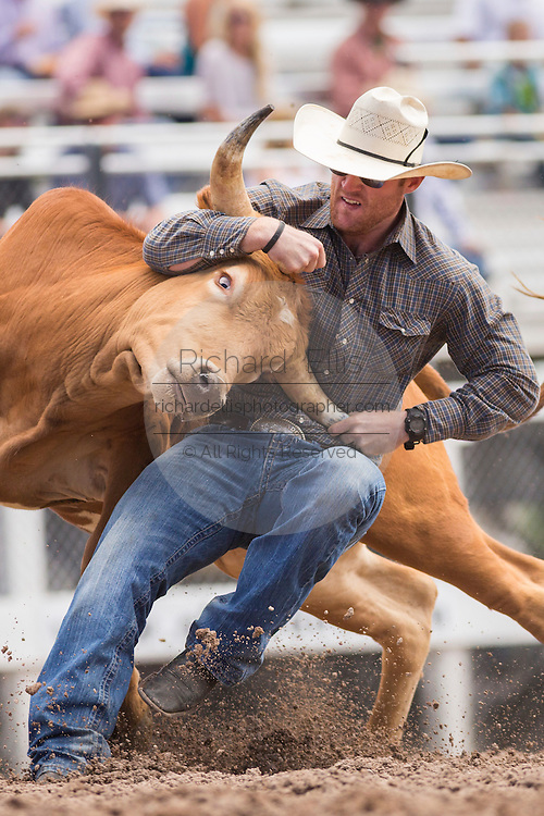 Steer Wrestler Jarret New of Wimberley, Texas brings his steer down at the Cheyenne Frontier Days rodeo at Frontier Park Arena July 24, 2015 in Cheyenne, Wyoming. Frontier Days celebrates the cowboy traditions of the west with a rodeo, parade and fair.