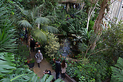 Open to the public on occasional Sundays, visitors tour the Barbican Conservatory in the City of London, on 27th January 2019, in London, England. The conservatory houses more than 2000 species of plants and trees, as well as terrapins and koi carp. Admission to the conservatory is free but public opening times are very limited; currently only afternoons on Sundays and some Bank holiday Mondays. Opening days and times are given on the Barbican website.