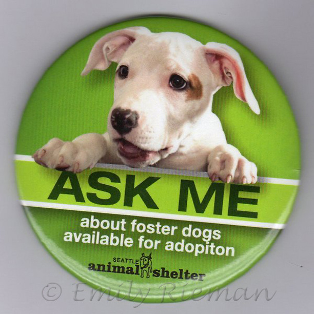 """Seattle Animal Shelter """"Ask Me about Foster Dogs"""" button"""