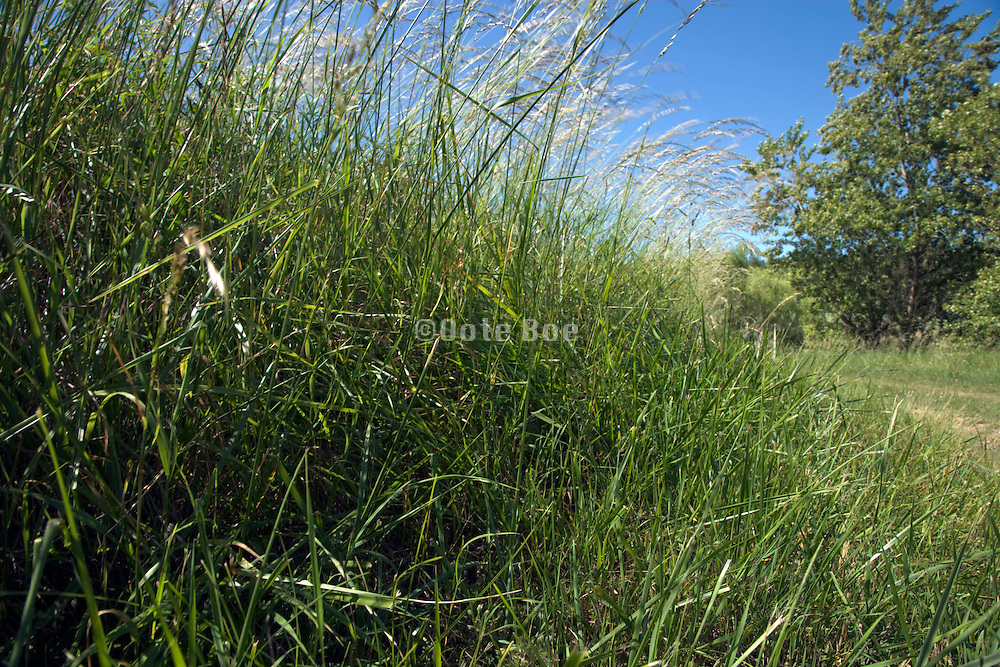 long grass at the side of the road