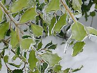 Ice Storm 02-Feb-2011