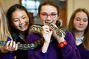 12/11/2018 Repro free: Galway Science and Technology Festival, the largest science event in Ireland, runs from 11-25 November featuring exciting talks, workshops and special events. Full programme at GalwayScience.ie. <br /> <br /> Python from The Bug Doctors collection ( Dr Michel Dugon- NUI Galway)   and   Amoy Meng     . Photo:Andrew Downes, Xposure.