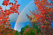 Rainbow framed by maples<br />Oxtongue Lake<br />Ontario<br />Canada