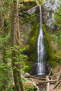 Marymere Falls, Olympic NP.