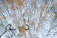 63877-00805 Trees with a dusting of snow aerial view Marion Co. IL