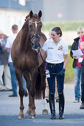 Vanommeslaghe Laurence, (BEL), Avec Plaisir<br /> Vet check dressage<br /> European Championschip Aachen 2015<br /> © Hippo Foto - Jon Stroud