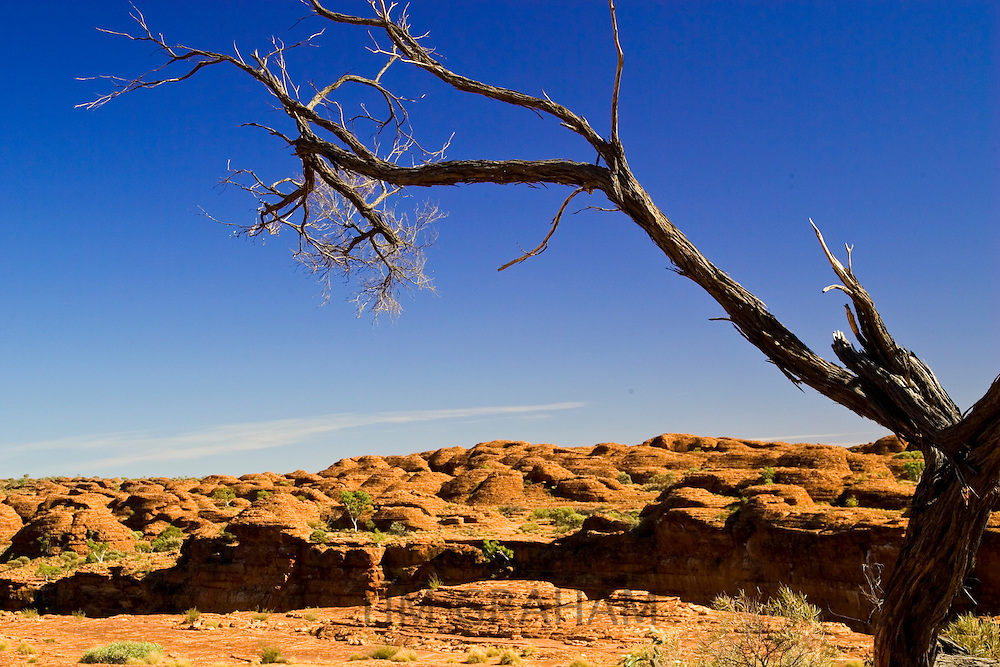 Tree at King's Canyon, Northern Territory, Australia