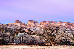 Waterpocket Fold, a rock ridge in Capital Reef National Park. this ranch on the outskirts is a beautiful place to grow a cow.