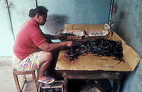 French Polynesia, Islands in the South Pacific, part of the French overseas Territories.Woman sorting dried vanilla beans in Raetaea..vanilla is an important agricultural product there..Photo by Owen Franken