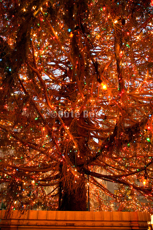 extreme close up of the Rockefeller Center Christmas tree with the lights burning in New York