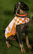 Tennessee mascot Smokey during the game between the Georgia Bulldogs and the Tennessee Volunteers at Sanford Stadium in Athens, GA on October 7, 2006.<br />