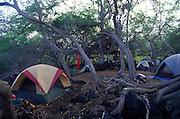 Camping, Alika Bay, Island of Hawaii<br />