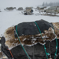 North of the Arctic Circle in Russia, sleds stacked with reindeer hides and other belongings await harnessing to reindeer for ongoing migrations of the nomadic Komi clan.