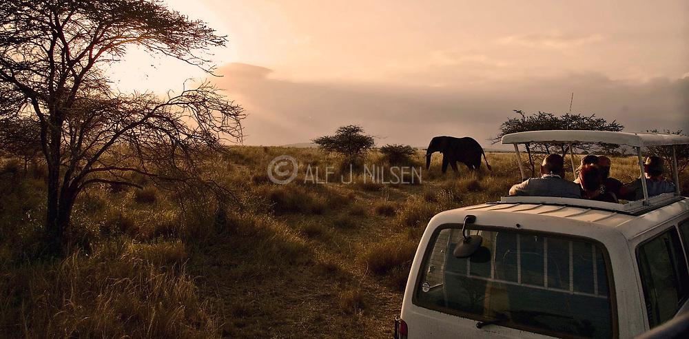 Game drive in Serengeti NP, Tanzania