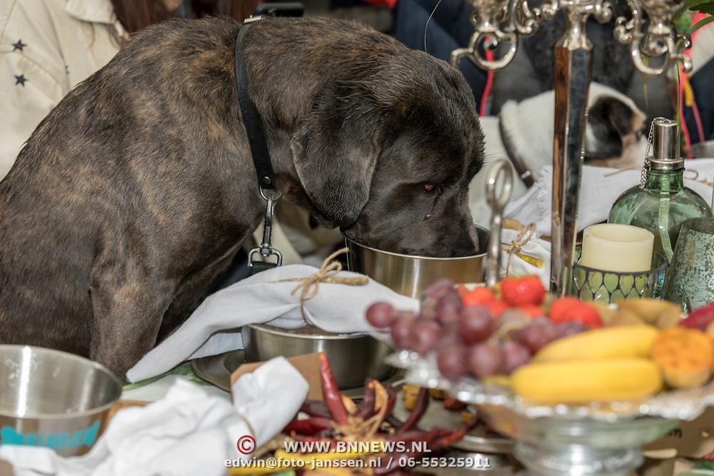 NLD/Blaricum/20191004 - Lancering hondenmerk Kluif van Rosanna Kluivert, Hondenontbijt
