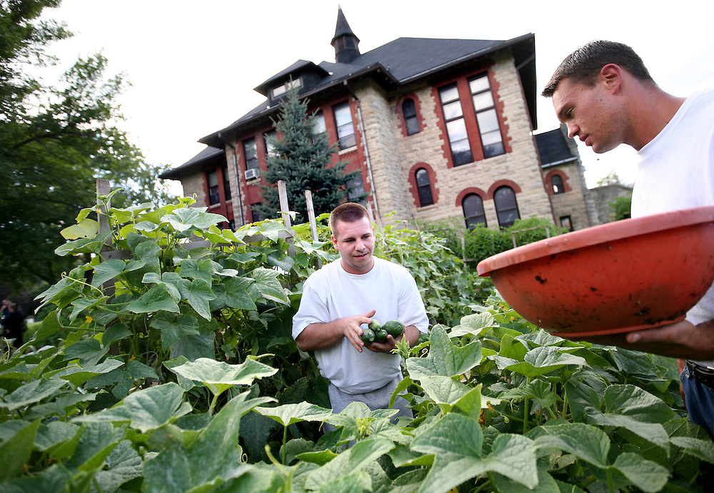 Inmates Nick Citrowske, left, and Nick Kennedy harvest cucumbers in the garden at the Minnesota Correctional Facility in Red Wing August 20, 2012.